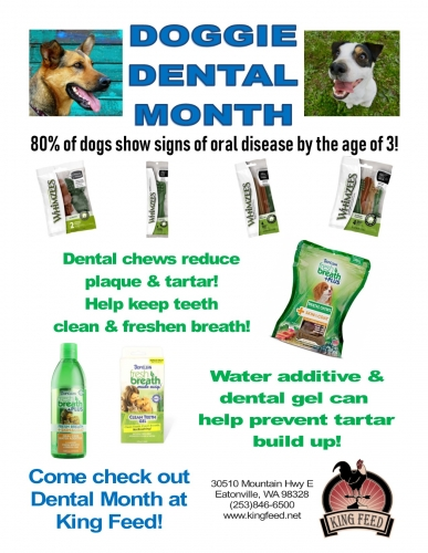 Pet Dental Month Savings Event