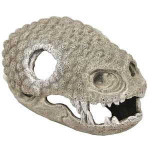 Exotic Environments® Gila Monster Skull Large