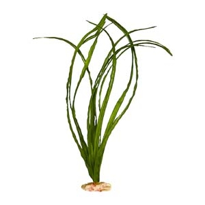 ColorBurst Florals® Narrow Eel Grass Green