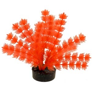 ColorBurst Florals® Foxtail Plant – Neon Orange