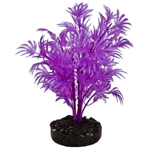 ColorBurst Florals® Dragon Leaf Plant – Neon Purple