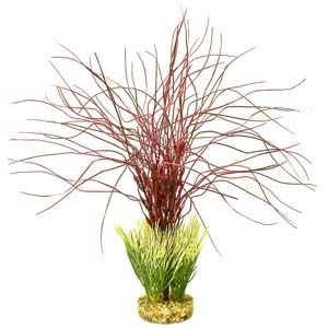 ColorBurst Florals® Gravel Base Plant – Water Hair Grass – Red