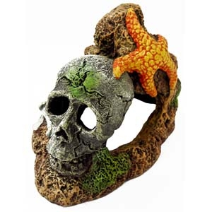 Exotic Environments® Skull With Starfish