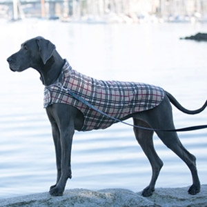 RC Pets Whistler Winterwear V.2.0 Dog Coat