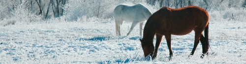 Get Your Barn & Livestock Ready for Winter