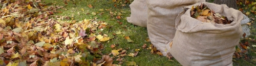 Fall Lawn & Garden Clean-up