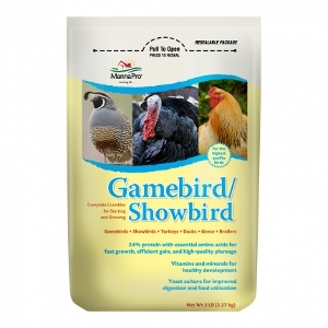 Gamebird/Showbird