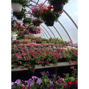 Hot Summer Greenhouse Sale