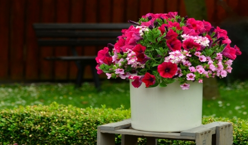 Recipe for Fabulous Looking Planters & Hanging Baskets