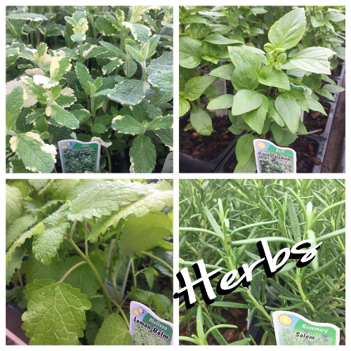 Integrity Nursery Has Herbs