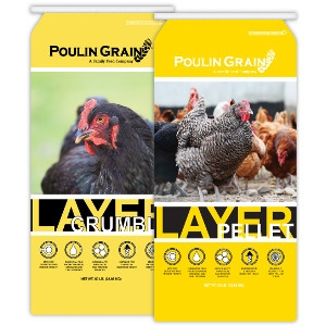 Egg Layer Crumbles & Pellets 50lb $13.99/each