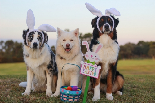 Pet Photos with the Easter Bunny!