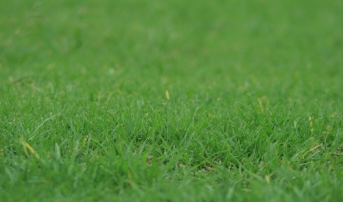 Lawn Aeration: The Tools and Tips You Need