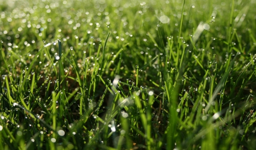 Renovate Your Lawn This Spring