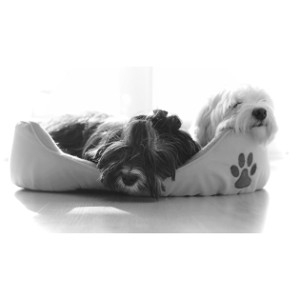 15% Off Any Pet Bed