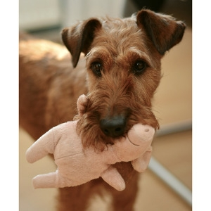 10% Off Dog or Cat Toys