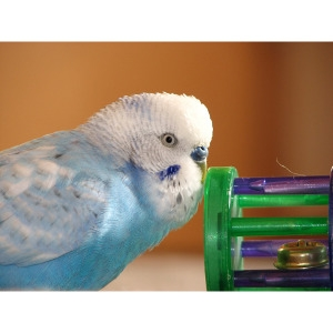 10% Off House Bird Toys & Treats