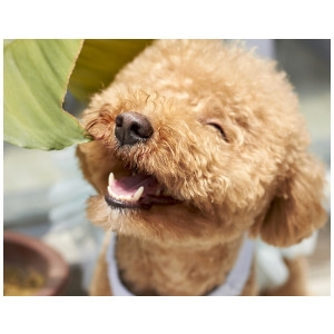 15% Off Pet Dental Products