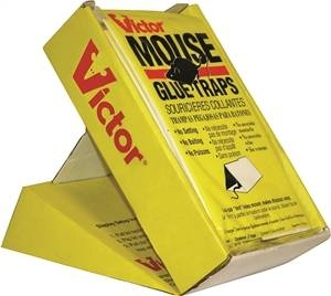 Victor® Glue Trap for Mice (2/pk)