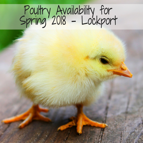 2018 Clyde's Feed Poultry - Lockport