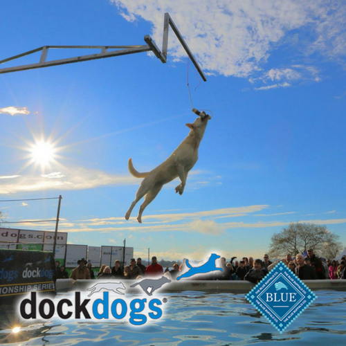 Dock Dogs Is Coming To Clyde's