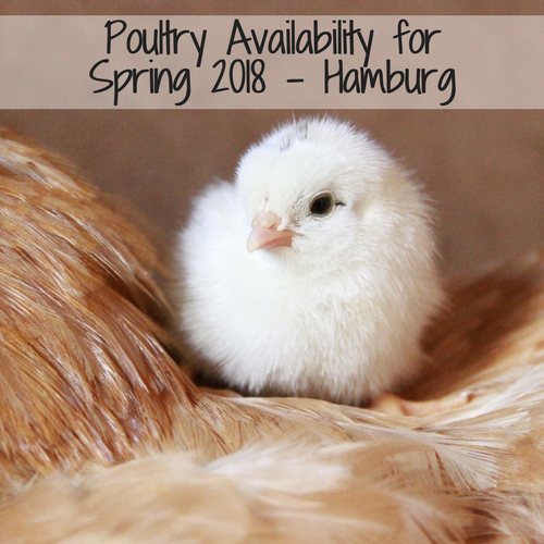 2018 Clyde's Feed Poultry - Hamburg