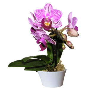 Exotic Orchids and Houseplants