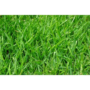 20% Off All Grass Seed & Fertilizers
