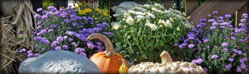 Gourds, white and blue mums, pumpkin outdoor arrangement