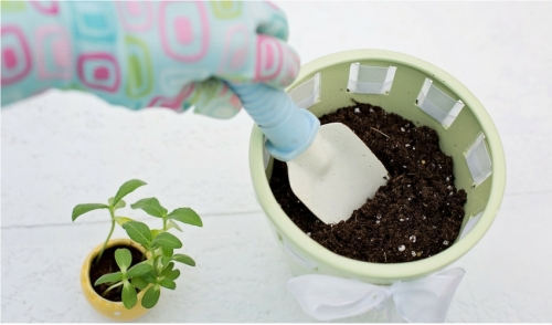 Repotting Can Cure Your Winter Blues