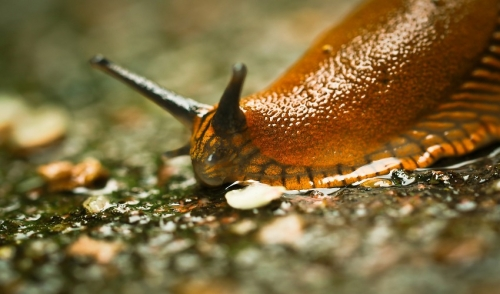 Slug's Know How to Party