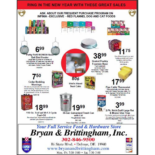 January Sales Flyer