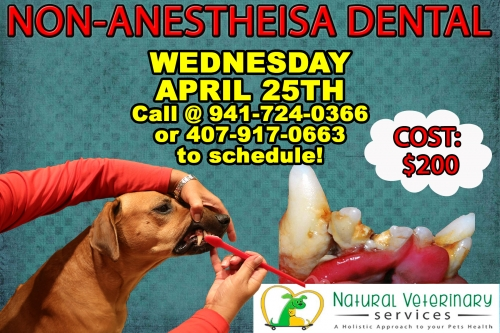 April Anesthesia Free Dental Cleaning