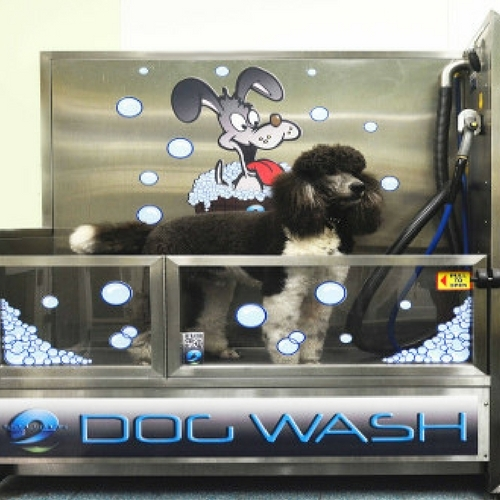 Diy dog wash brookline dog grooming diy dog wash solutioingenieria Images