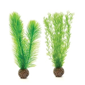 Small Green Feather Fern Plant