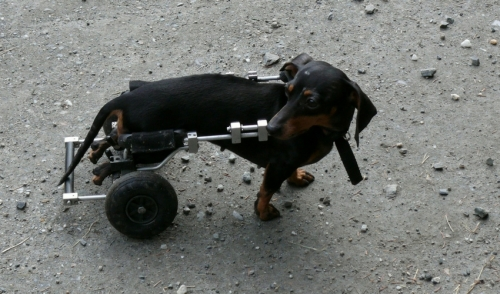 Helping Physically Challenged Pets