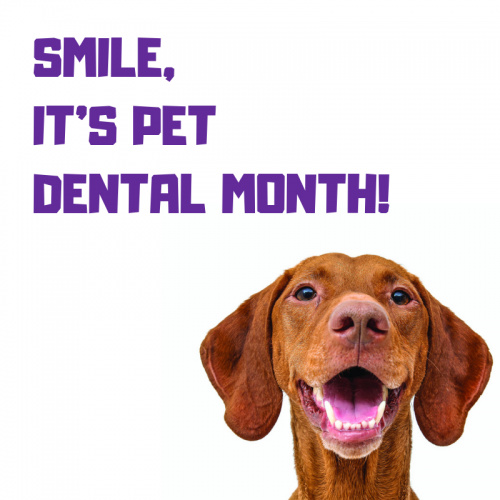February is Pet Dental Month!