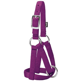 Large Purple Goat Halter
