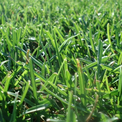 Turf Master Grass Seed