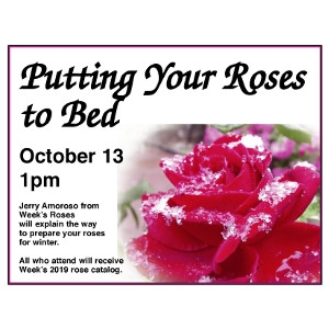 Putting Your Roses To Bed