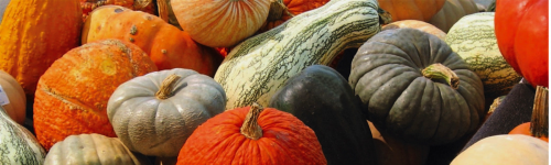 ​Pumpkins have arrived,