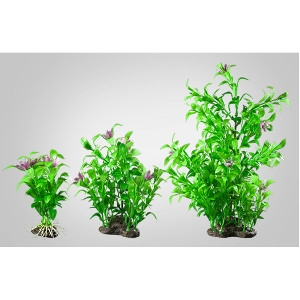 Elive Blooming Ludwigia- Large 9-10