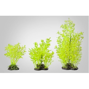 Elive Neon Green Lindernia- Large 9-10