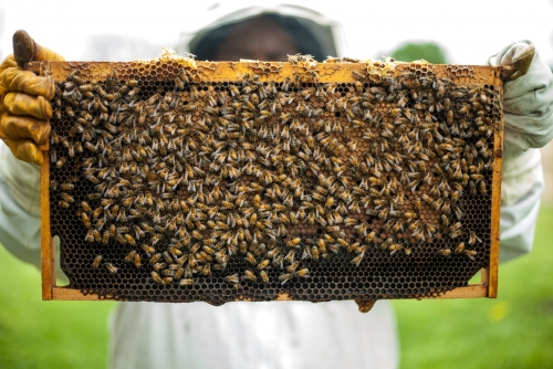 Beginners Bee Keeping Seminar
