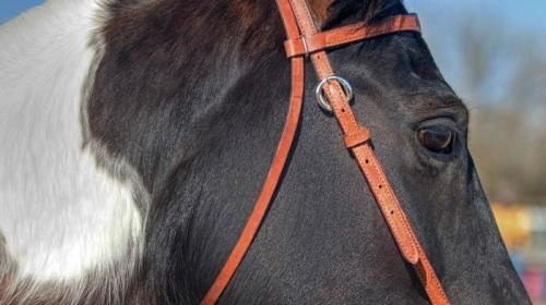 horse close-up of bridle