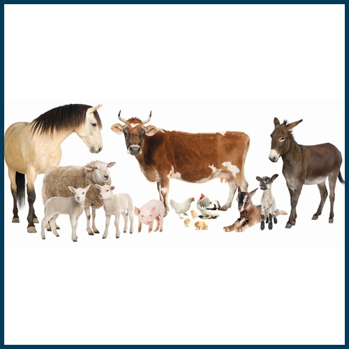 Animal Health, Apparel and Footwear, Automotive, Bulk