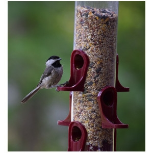 25% Off Assorted Bird Feeders