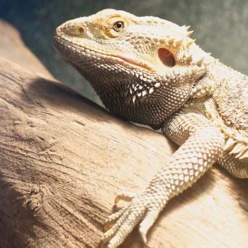 Reptile Supplements, Lighting, Terrariums, Substrates, Accessories, and More at Soldans Pet