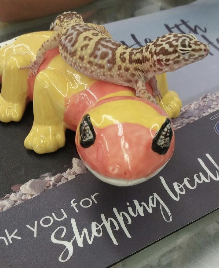 Bananas, the Leopard Gecko, is proud to shop locally at Soldan's