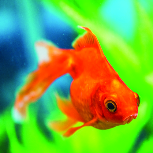 Aquatic Pelleted Food, Frozen Food, Aquariums, Supplements, Lighting, Filtration, Heaters, and more at Soldans Pet